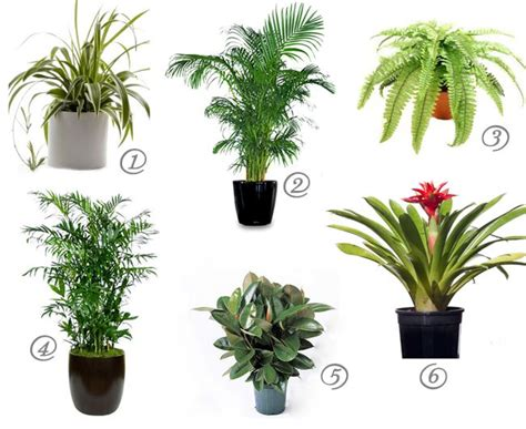 Detox Plants Safe For Cats by Cat Safe House Plants For Cleaner Air Spider Plant
