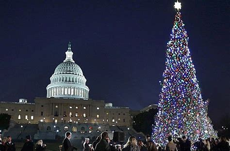 united states capitol christmas tree to but cut this fall