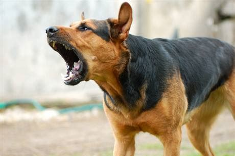 how to stop your from barking excessive barking breed plus
