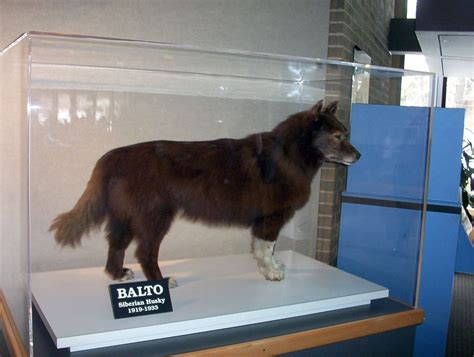 balto the balto s real stuff the true story