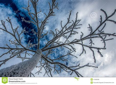 Tree Frosted - frosted tree stock photo image 47606938