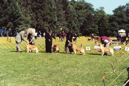 island golden retriever club activities things you can do with your golden