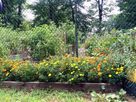 2016 union county means green community garden grant