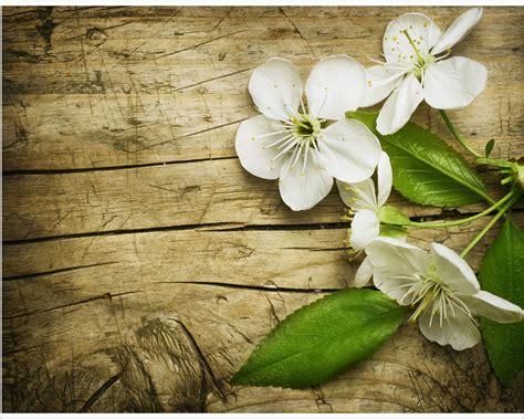 ciliegio fiori profumati fiori di ciliegio fiori sta su tela
