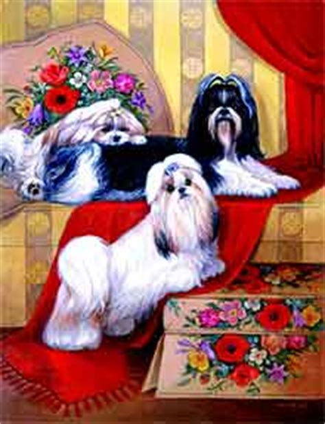 emperor shih tzu fascinating shih on emaze