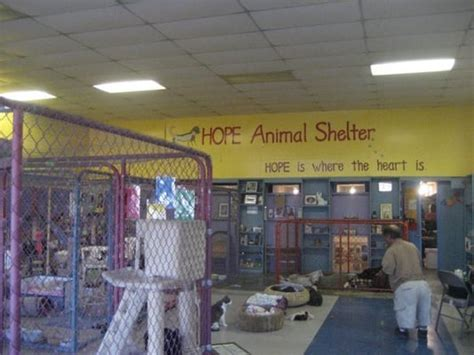 shelter tucson animal shelter animal rescue shelters tucson az united states yelp