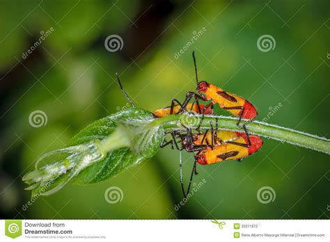 bug xl reguler 1gb yellow and red bugs on a bush stock photography image