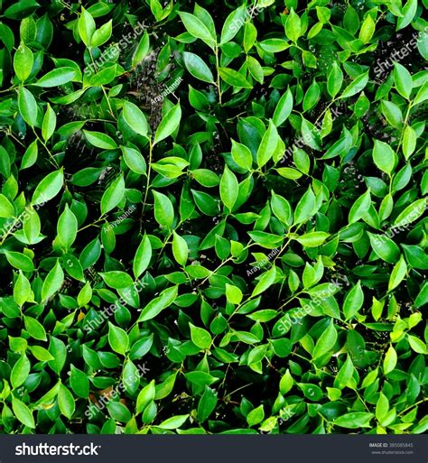 pattern bush leaf green background pattern vertical green leaves wall stock photo