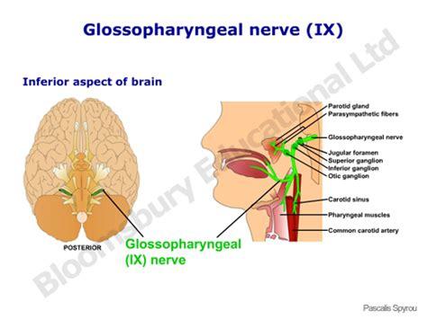 vestibulocochlear reflex cranial nerve ix causes symptoms treatment cranial nerve ix