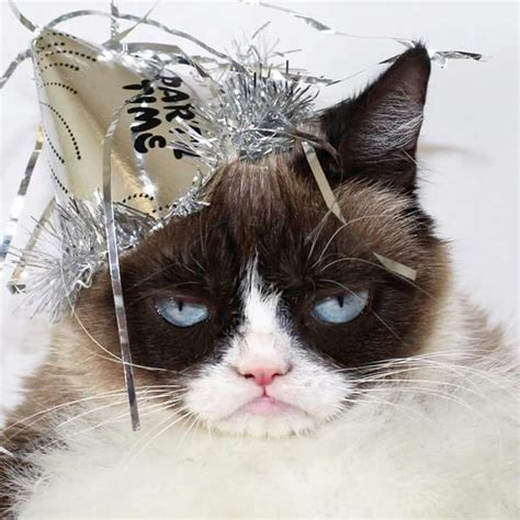 new year cat images 59 best images about new years cats on