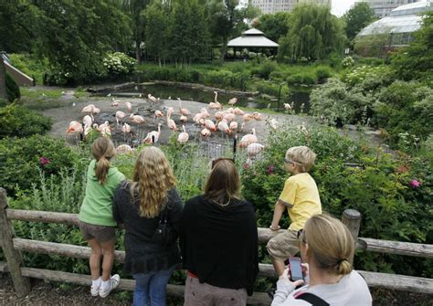 lincoln park zoo entry fee how does the st louis zoo stack up by the numbers