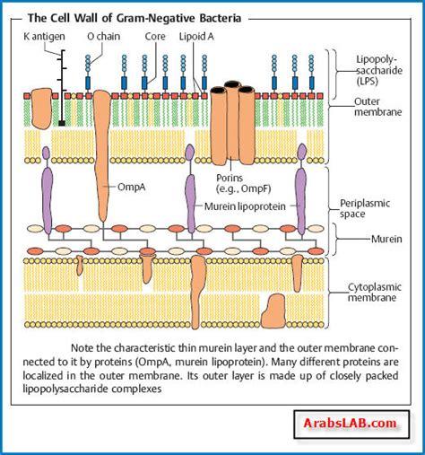 morphology  fine structure  bacteria