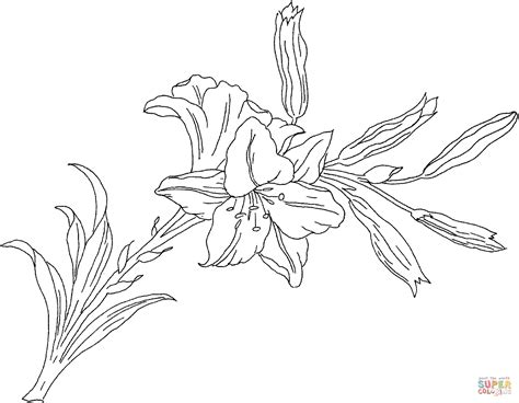coloring pictures of lily flowers lilium or lily flower coloring online super coloring