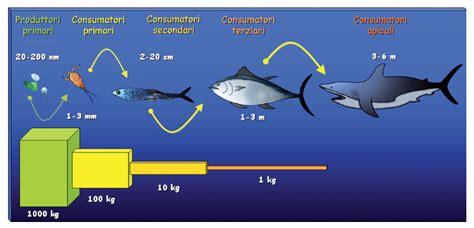 catena alimentare mare reti trofiche