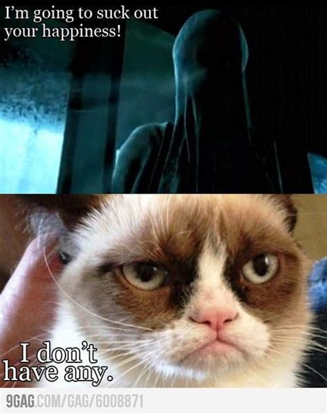 Best Grumpy Cat Meme - top 35 grumpy cat memes cutest cats