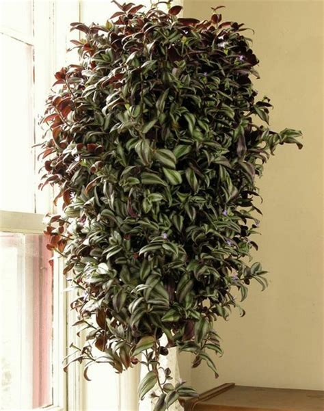 Hanging Plants Indoor Indoor Hanging Baskets Www Coolgarden Me