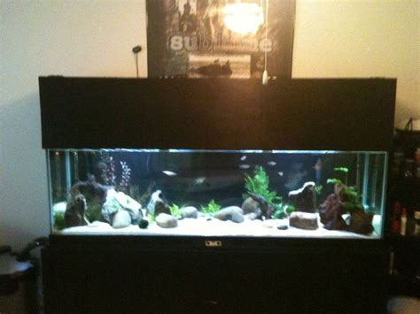 aquarium design homemade 26 best images about fish tank on pinterest pvc pipes