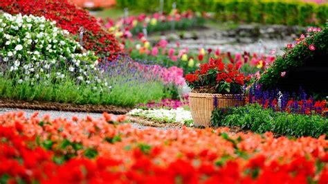beautiful spring pictures  wallpapers