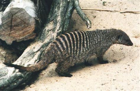 berlin zoologischer garten unfall tierpark berlin