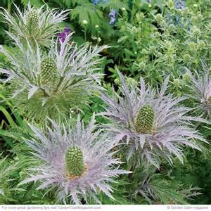 drought tolerant plants garden gate enotes