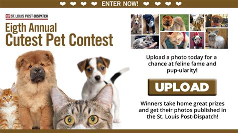 Pet Sweepstakes - cutest pet contest image mag