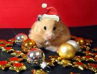 ACAD Holiday Special 2013 Hamster With Christmas Ornaments