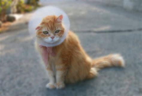 otite interna sintomi orecchie e otite negli animali la prevenzione 232 la