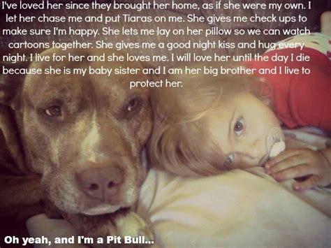 Rip Sgt Stubby 220 Ber 1 000 Ideen Zu Pit Bull Zitate Auf Hundespr 252 Che Blue Pits Und Bull Terrier