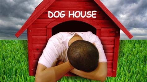out of the dog house national get out of the dog house day wistv com columbia south carolina