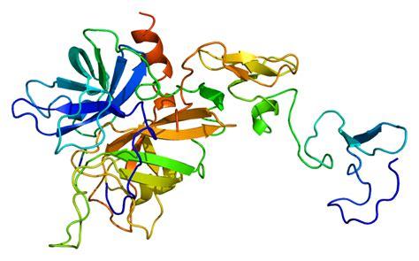 c protein protein c