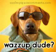 Wazzup Meme - wazzup graphics and gif animations for facebook