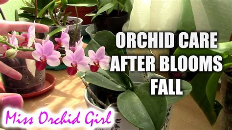 how to care for orchids after blooms fall orchid nature