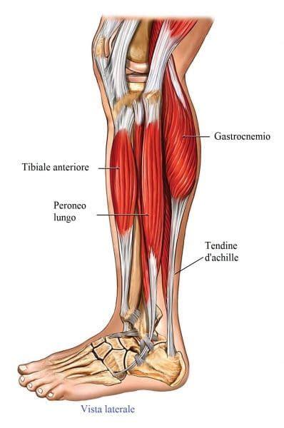 contrattura interno coscia dolore al polpaccio sinistro o destro