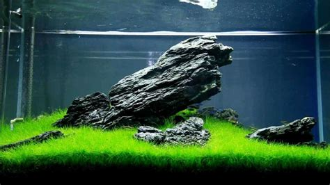 aquascaping guide  beginners