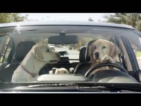 Subaru Golden Retriever Commercial Subaru Tested Subaru Commercial In The House