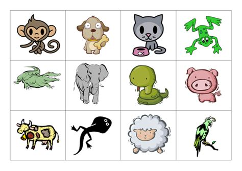 printable animal pictures for sorting animal classification by choralsongster teaching