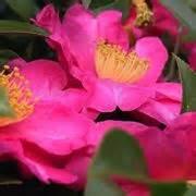 grossi fiori da giardino fiori da giardino giardinaggio fiori per il giardino