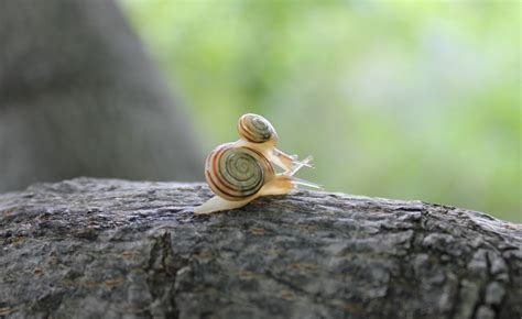 nature canada september photo of the month garden snails