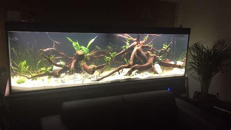 bio innenfilter filteranlage im aquarium