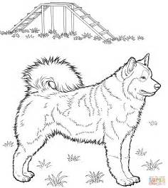 husky coloring pages husky coloring page free printable coloring pages