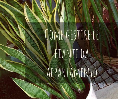 piante per interni resistenti piante da interni resistenti gardenia jasminoides piante