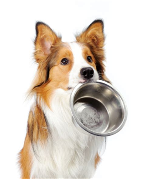 how to find a puppy how to find quality food sponsored post