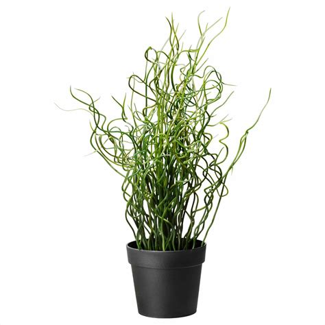 indoor potted plants indoor tall potted plants darxxidecom