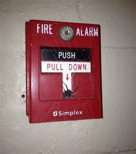Spider Fire Alarm Meme - top 10 worst places to find spiders paperblog