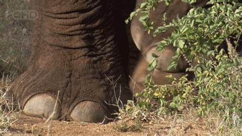 today  world elephant day  advocate