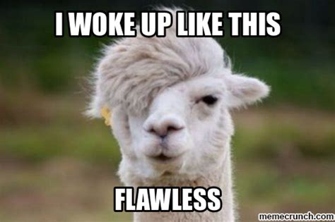 Funny Llama Memes - welcome to car memes com