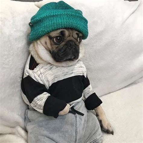 pug puppies in clothes 1532 best pugs images on pugs doggies and animals