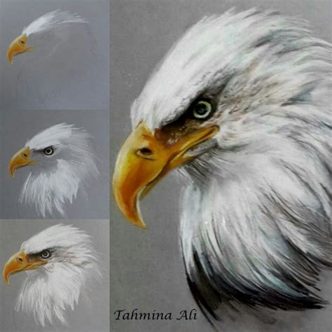 25 best ideas about eagle drawing on eagle sketch colour pencil drawing and eagle