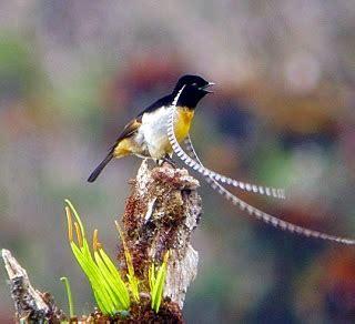 Tempat Pakan Burung Antik burung antik bertanduk ocehan kenari