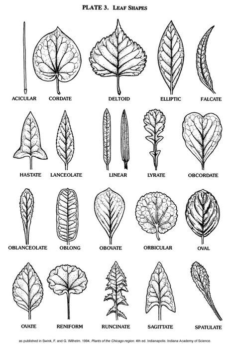 design art types leaf shapes love all their names random things